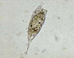 種類 プランクトン